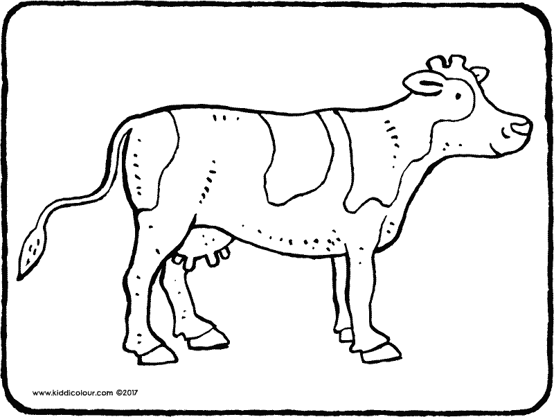 cow colouring page drawing picture 01k