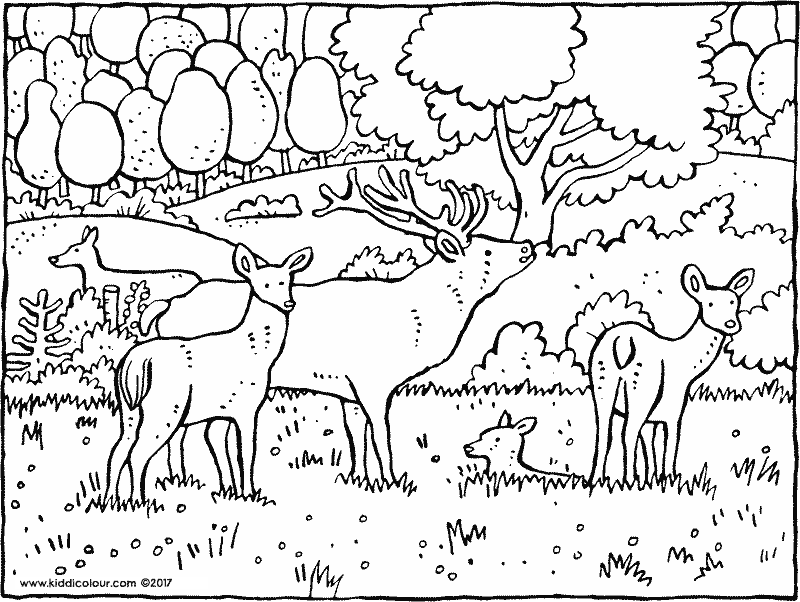 deer in the woods colouring page drawing picture 01k