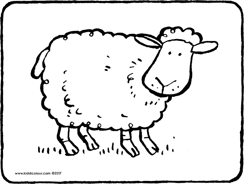 sheep colouring page drawing picture 01k