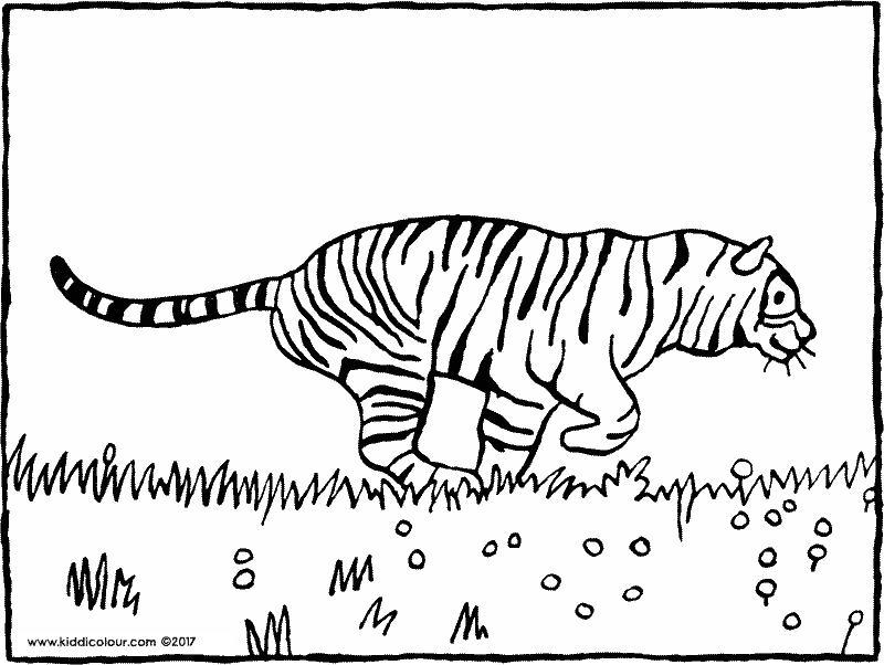 tiger colouring page drawing picture 01k