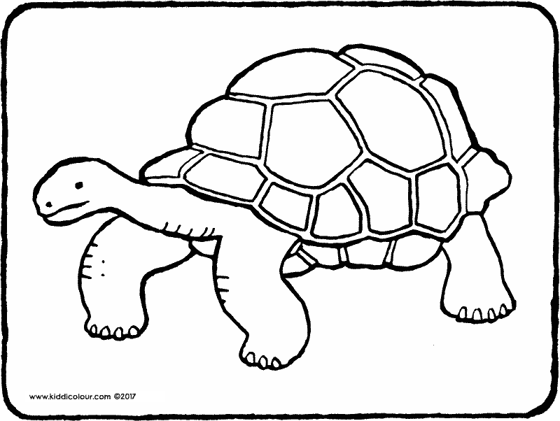 tortoise colouring page drawing picture 01k