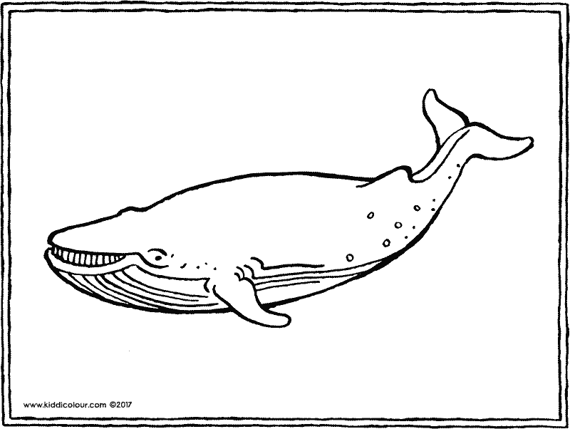 whale colouring page drawing picture 01k