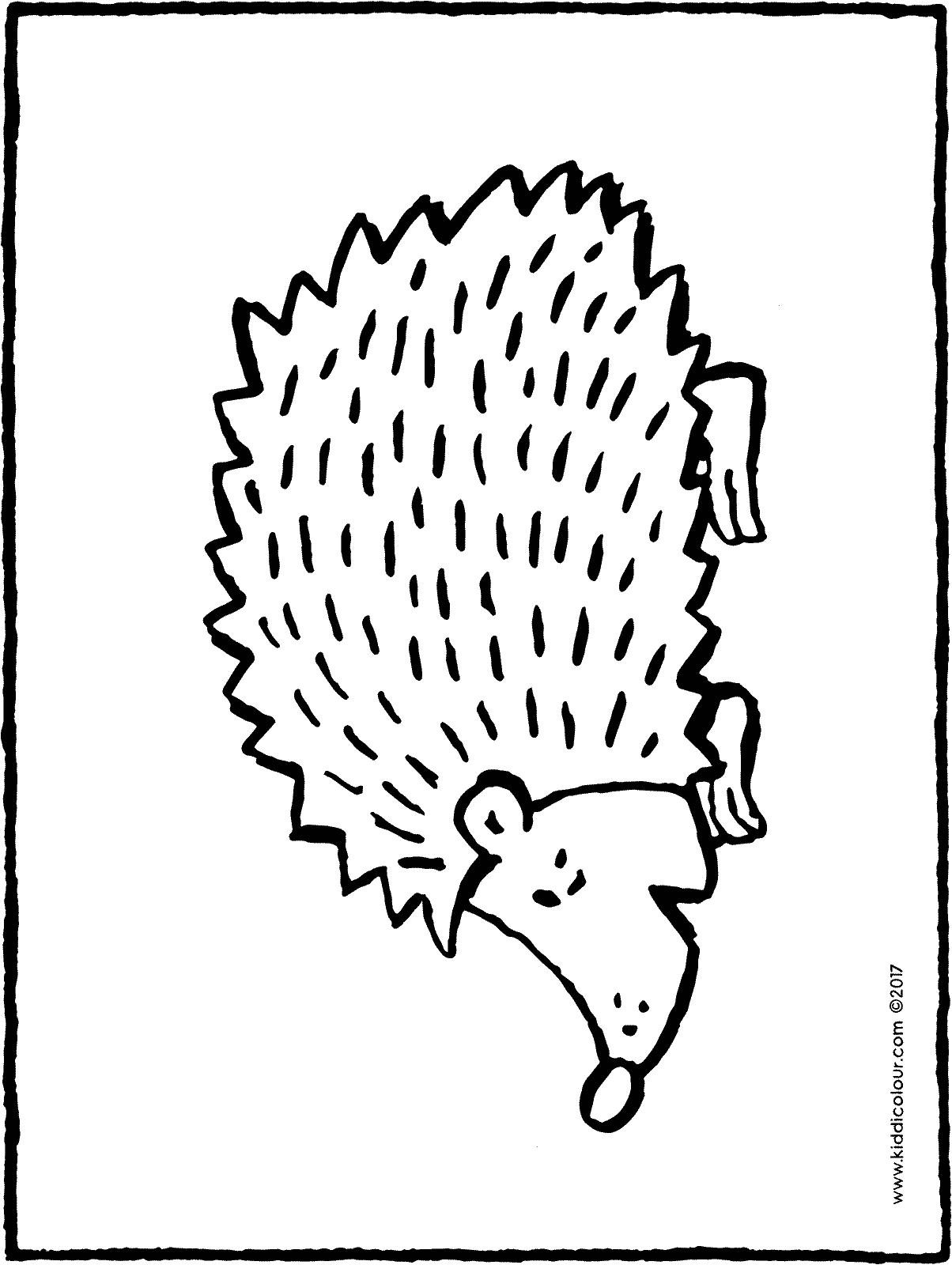 hedgehog colouring page page drawing picture 01V