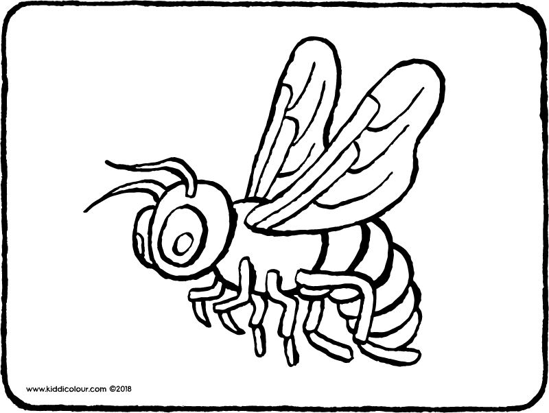 bee colouring page drawing picture 01k