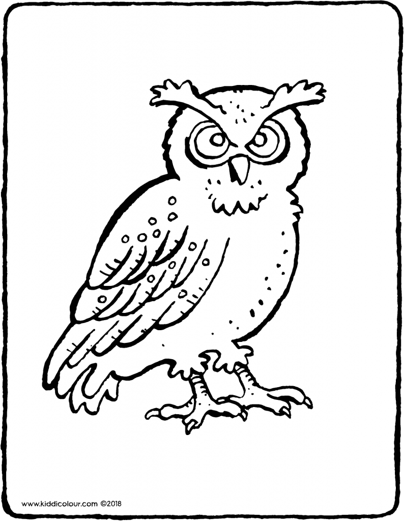 owl colouring page drawing picture 01V