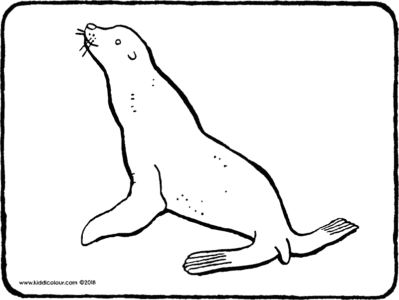 sea lion colouring page drawing picture 01k