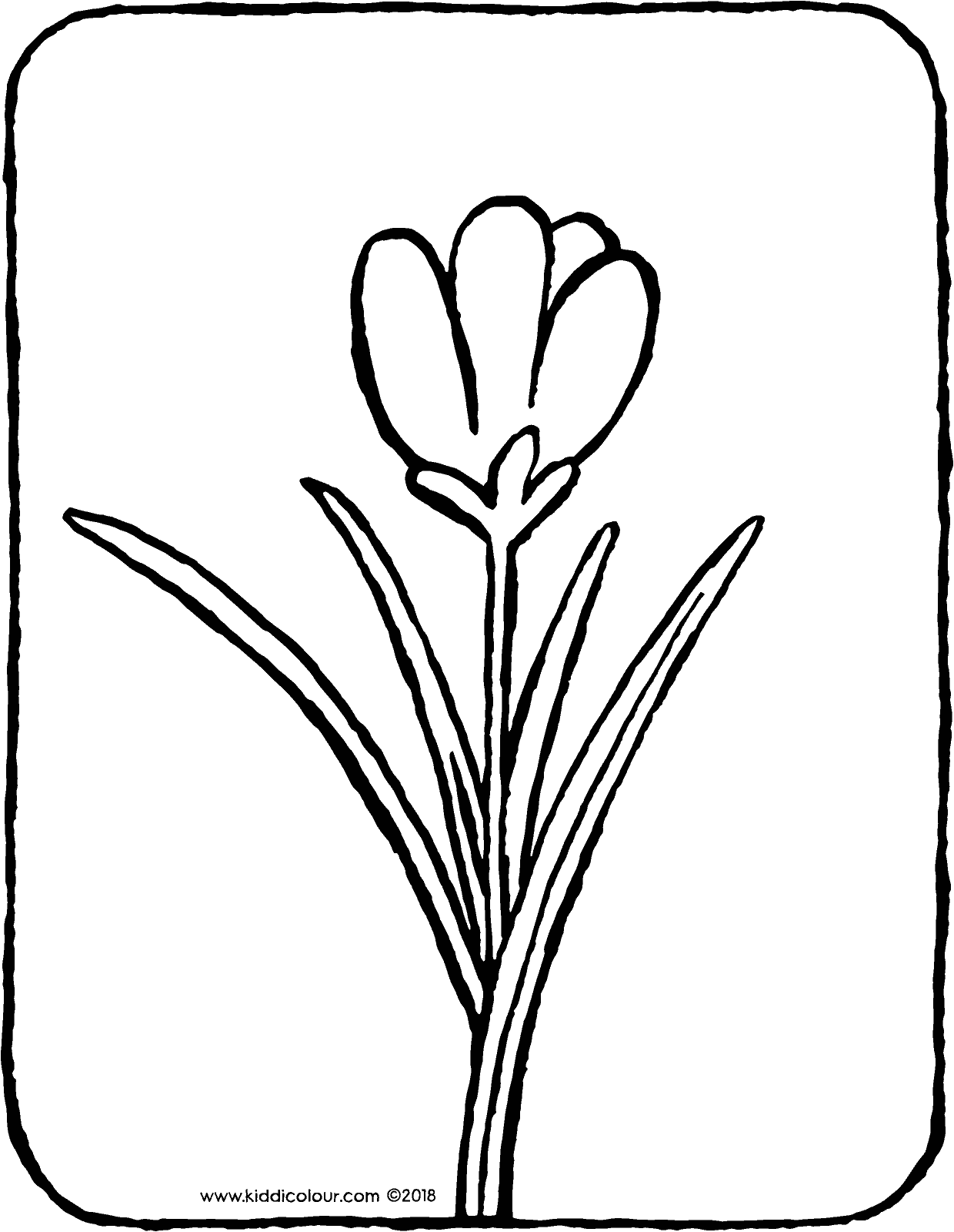 crocus colouring page drawing picture 01V