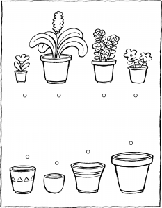 which plant fits in which pot