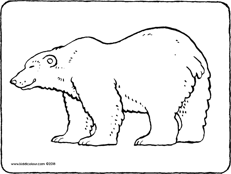 polar bear colouring page drawing picture 01k