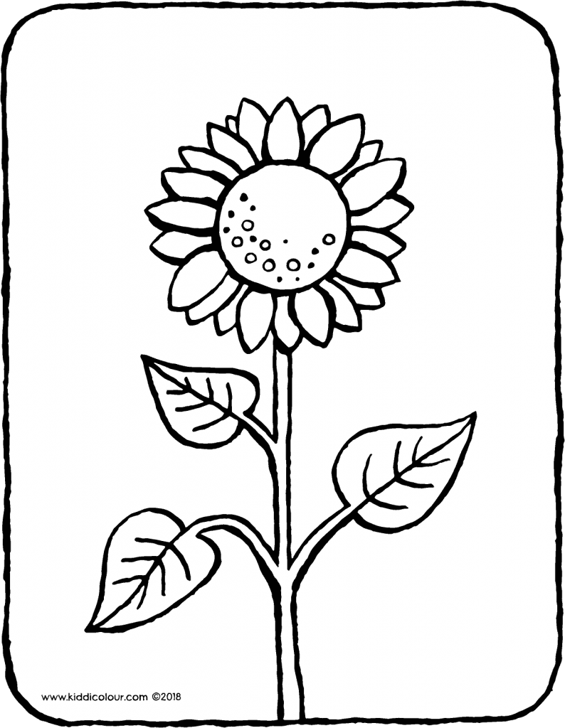 sunflower colouring page drawing picture 01V