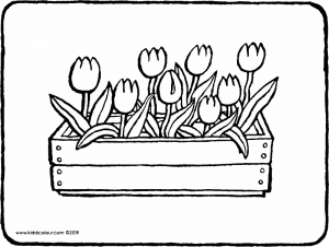 tulips in a wooden planter