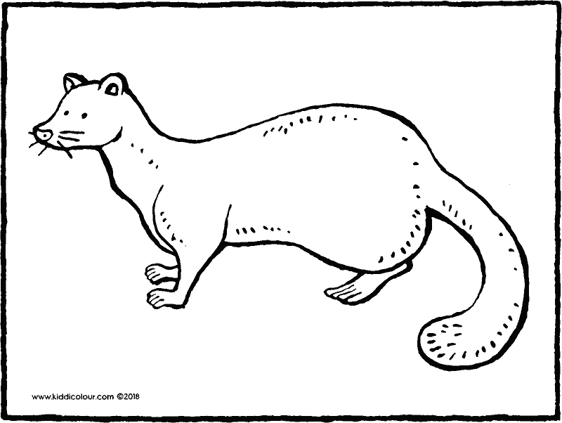 pine marten colouring page drawing picture 01k