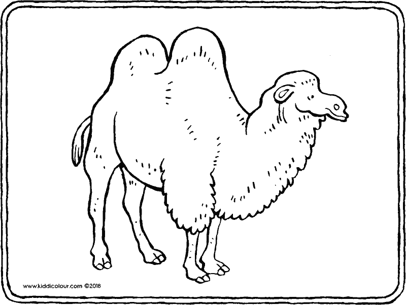 camel colouring page drawing picture 01k