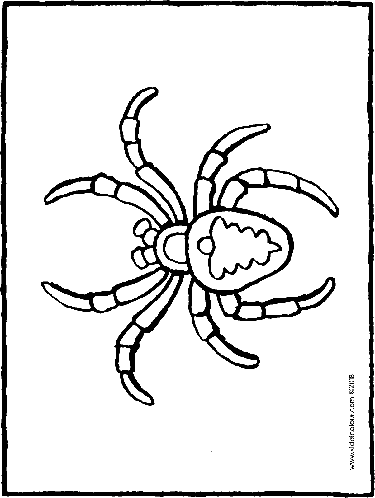 spider colouring page drawing picture 01H
