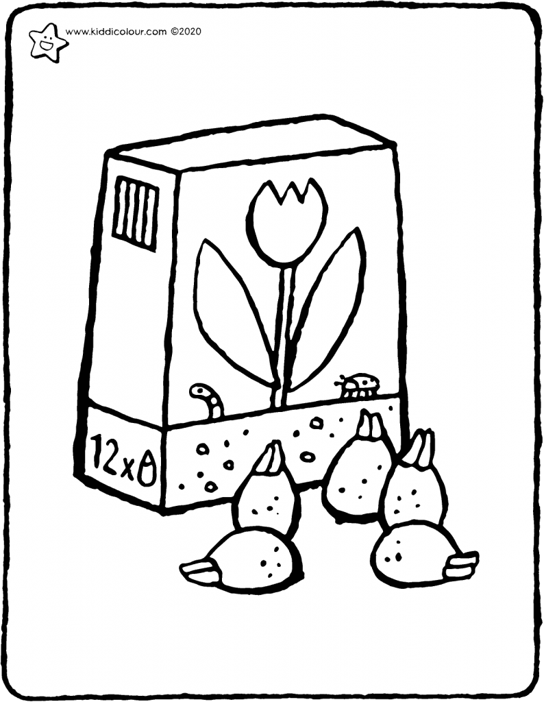 flower bulbs colouring page drawing picture 01V