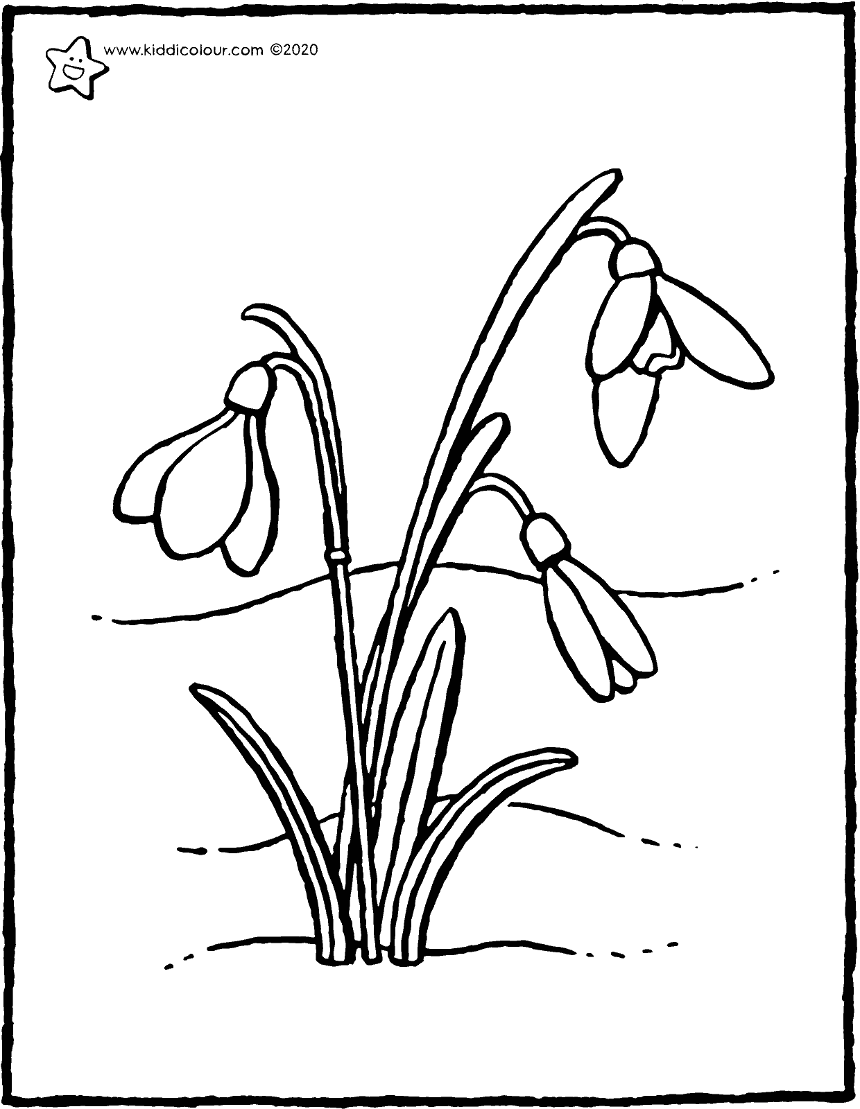 snowdrops colouring page drawing picture 01V