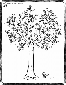 a tree in spring