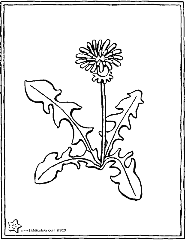 dandelion colouring page drawing picture 01k