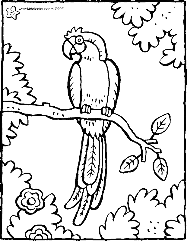 parrot colouring page drawing picture 01k